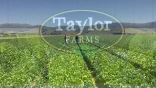 Taylor Farms Commercial