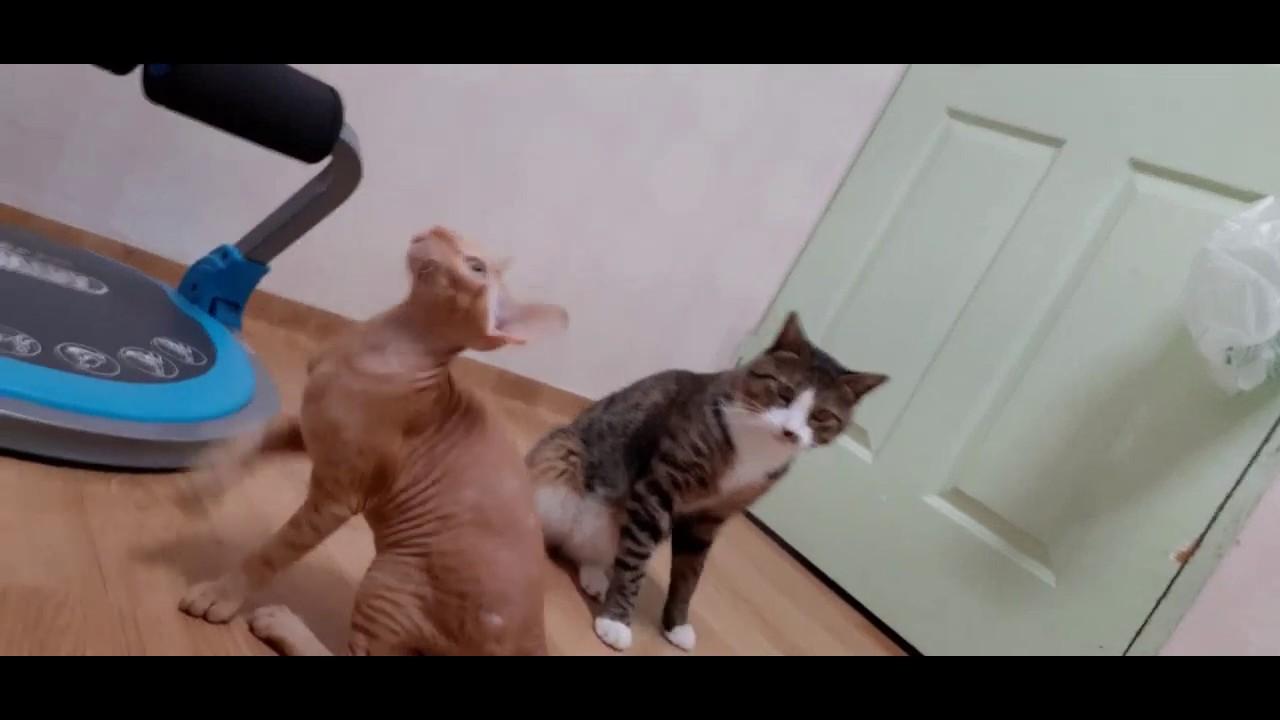 아기 고양이와 하는 첫놀이 (갤럭시A50, 4k촬영)