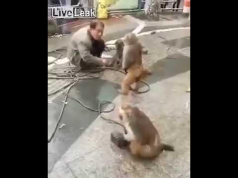 Обезьяна нападает на человека с тесаком