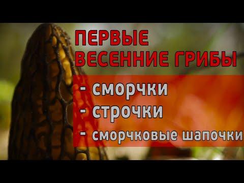 Первые весенние грибы: