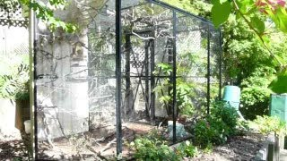 Beautiful Natural Finch Aviary: How to set one up