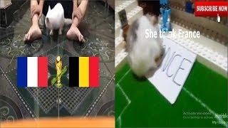 France vs Belgium Prediction World Cup 2018 | Semi-final | HamHolic vs Cat