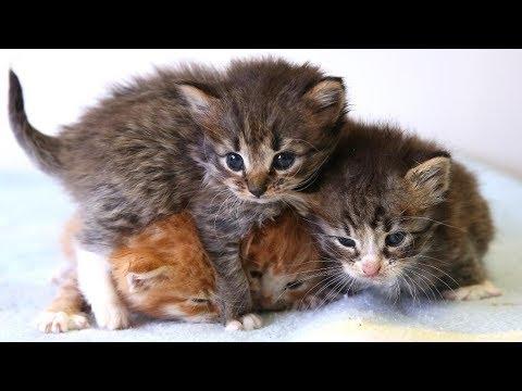 Anak Kucing Anggora Terlantar Tanpa Induk Di Asuh Betina