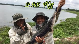 Khmer Fishing at Takeo province-Cambodia Traditional Fishing-Khmer Cast Net Fishing