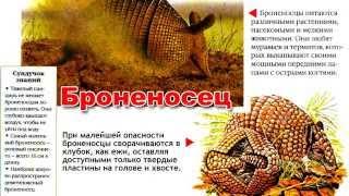 Энциклопедия для детей. Буква Б. Броненосец. Educational video.