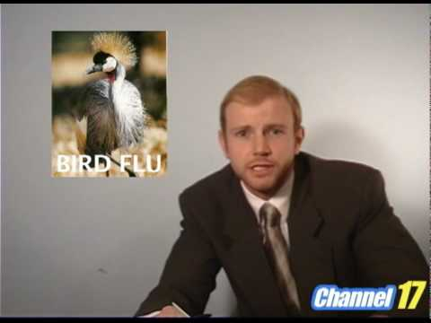 Joy To the World - Bird Flu