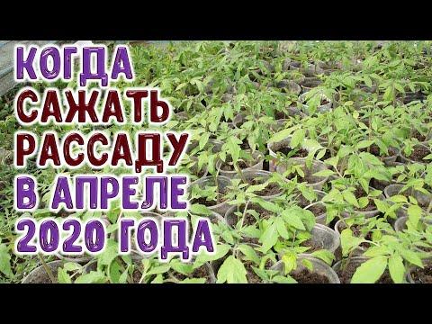 Высаживайте рассаду овощных и цветочных растений в лучшие дни апреля 2020 года. Гороскоп посадки рас