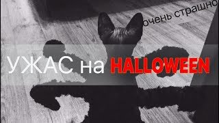 Очень страшно! Ужасы, кошка паук, костюм для кошки на хэллоуин. Mutant Giant Spider Cat. Prank.