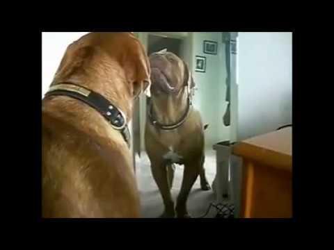 Ayna da Kendini Gören Sevimli Hayvanların Tepkisi
