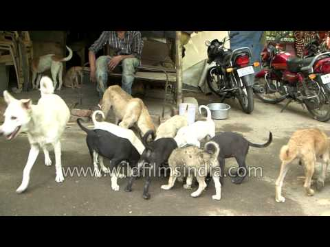 Delhi boy speaks about shelter for dogs