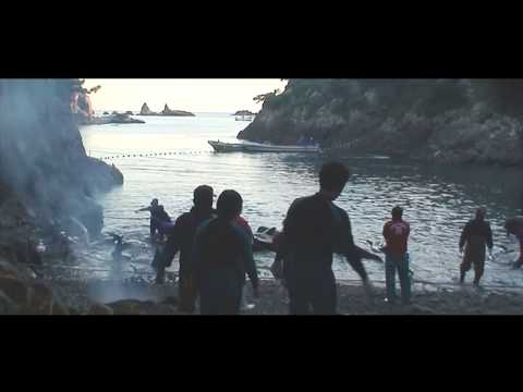 Brutally Slaughter pilot whales -Taiji Cove OPS Footage