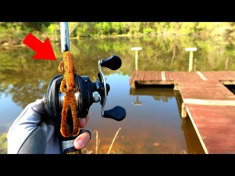Sight Fishing AGGRESSIVE Bedding Bass w/ DEADLY Creature Lure!!!