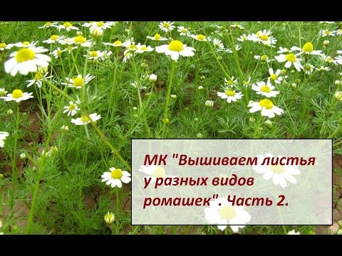 МК Вышивка ромашек 2 часть. Разживалова Наталья