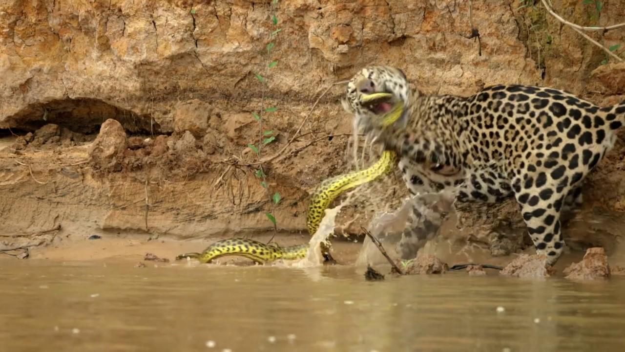National Geographic | Vahşi Gezegen