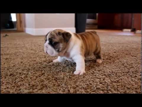 Thumbnail OMG! These Puppies Will Melt Your Heart!