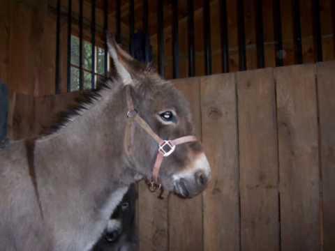 Donkey Hotey - YouTube
