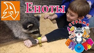 Контактный зоопарк. Еноты и лемуры. Contact Zoo. Raccoons and lemurs.