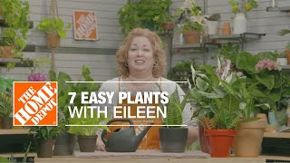 7 Easy Plants with Eileen | Indoor House Plants | The Home Depot