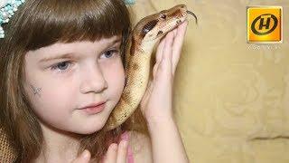 Дети и змеи: стоит ли боятся держать рептилию дома?