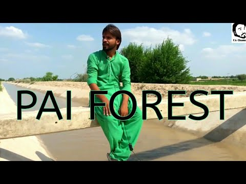 Pai Forest Sakrand | The Largest Forest Of Pakistan | FK Channa Vlogs