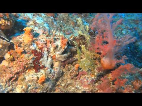 Plongée sous-marine aux Philippines, Ile de Malapascua 2014 HD