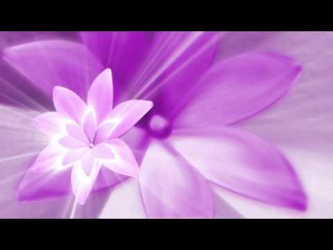 Beautiful Flowers Video Background Loop Free Download HD