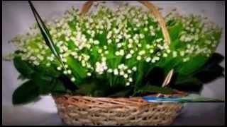 Ландыши, Ландыши цветы ...