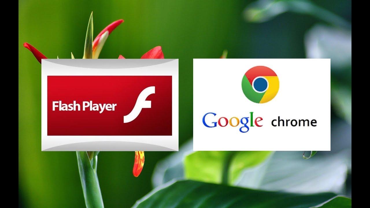 adobe flash player google chrome android