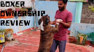 Boxer dog ownership review | how to train dog | Rk vlogs
