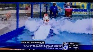 Dog Surfing in Orange County - KTLA Media Coverage