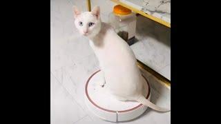 샤오미로봇청소기와 고양이