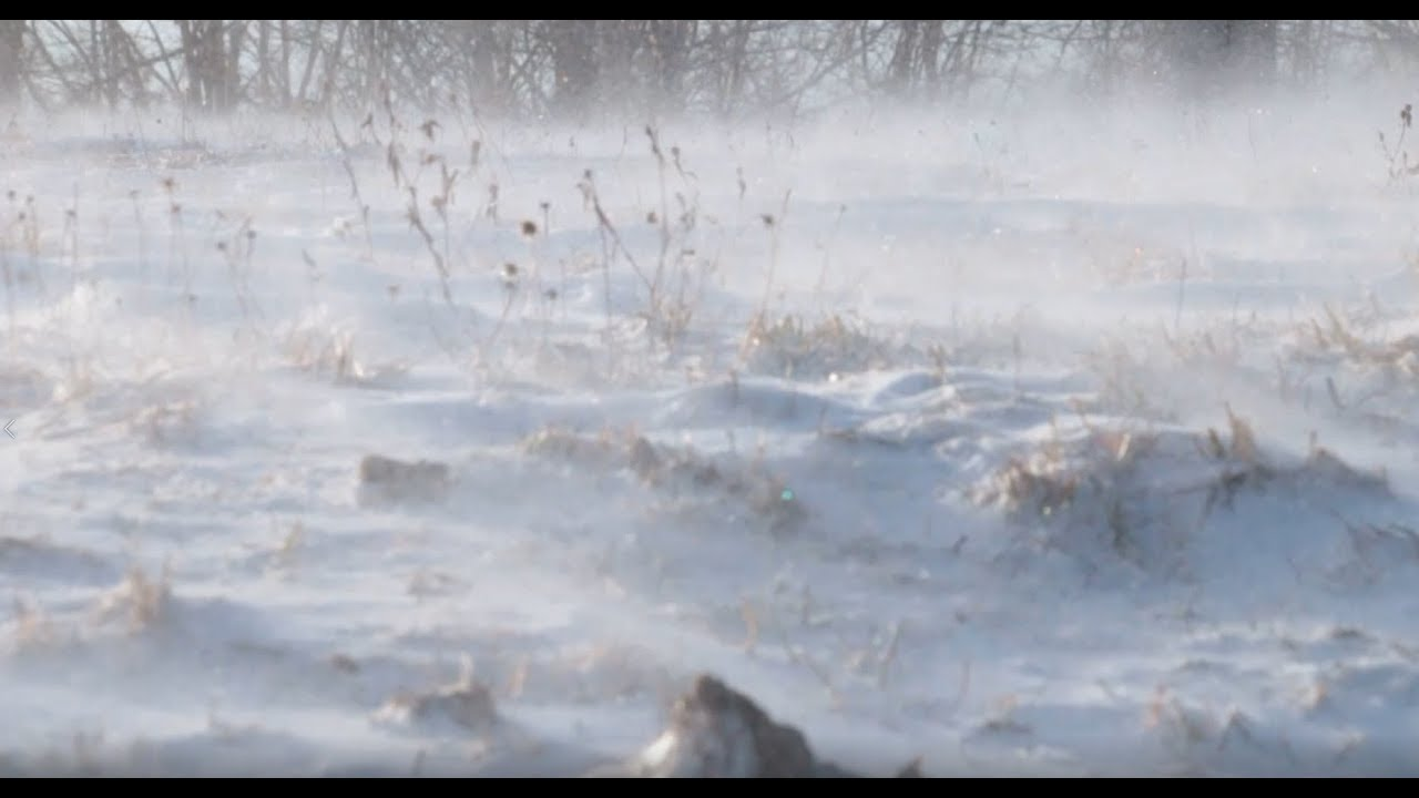 Snow Blizzard Relaxing Wind Sounds 1 Hour / Strong Winds Blowing Snow  (Relax, Sleep, Study,   )