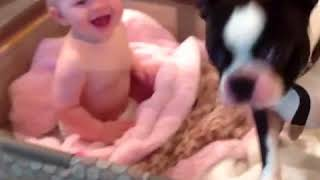 Pets Making Babies Laugh Top Funny Animals Try Not to Laugh