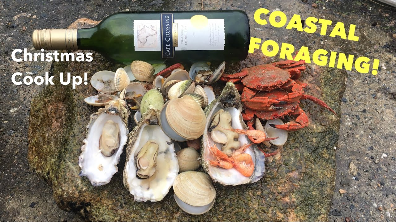 COASTAL FORAGING/ Big Oysters, Swimming Crabs and a Cook Up On the Beach ! Christmas Vlog