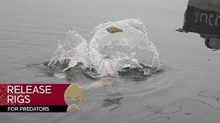 Westin Release Rig - Westin-Fishing