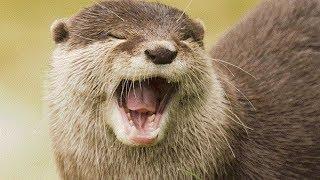 Otter pop - otter pop - meme (tomtord/eddsworld) •flipaclip•