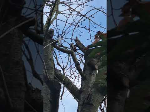 L'oiseau dans le cerisier