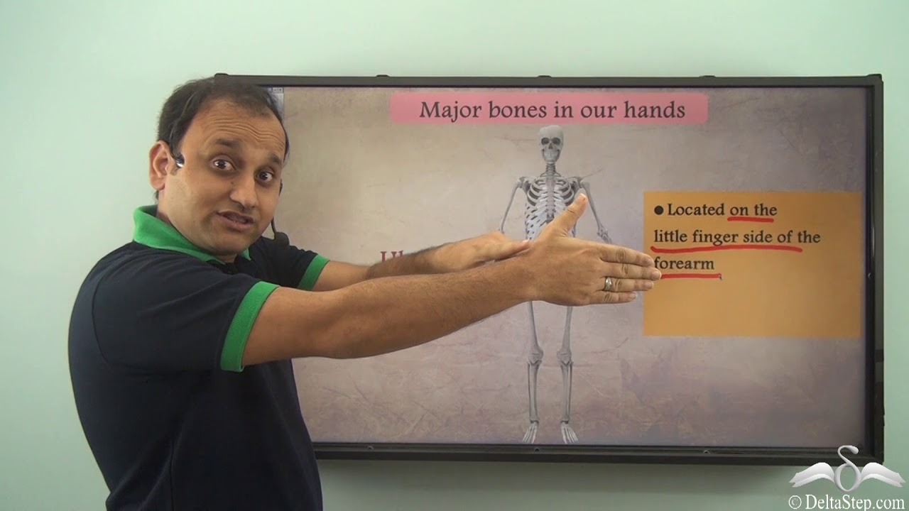 Bones Of The Arms And Legs Of The Body Youtube