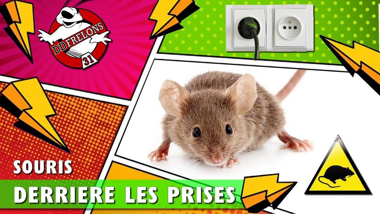 Souris Dans Les Murs Comment Faire gros problème de souris dans les murs ??