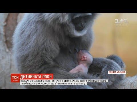 ТСН: ТОП-10 народжених цьогорічних звірят склав британський зоопарк