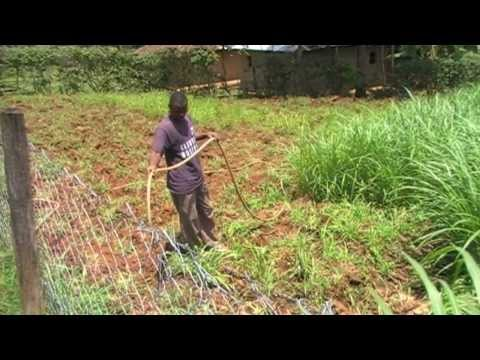 IRRIGATION WITH WATER FROM FISH PONDS