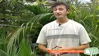 Видеосеминар - пальмы(Строительный портал http://donosvita.org/ представляет видео о пальмах., 2012-04-24T11:16:23.000Z)