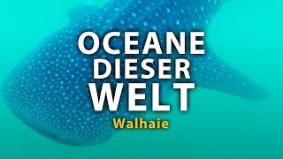 Ozeane dieser Welt - Walhaie (2011) [Dokumentation] | Film (deutsch)