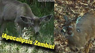 ¡ALERTA por Virus Zombie en Venados! Podría AFECTAR A HUMANOS