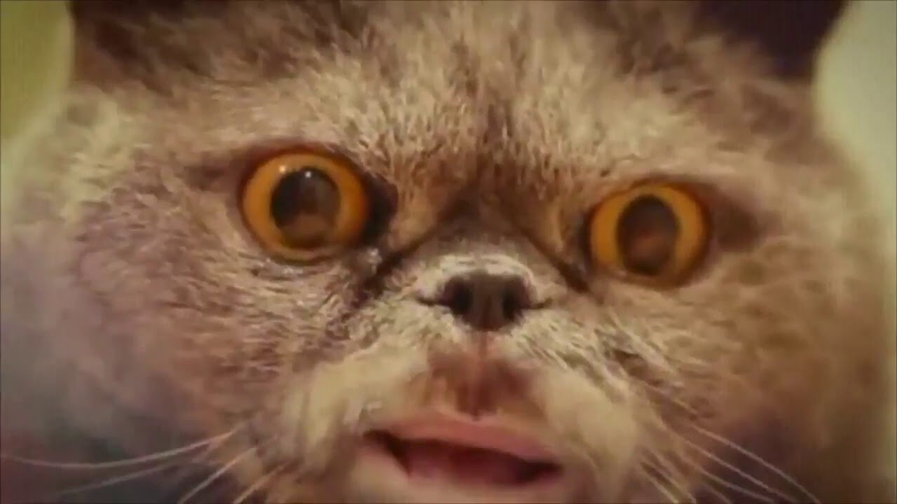 Funny Cat Videos Human Mouth