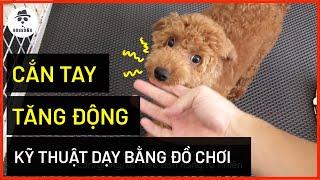 Cách dạy chó c๐n hết cắn tay chi tiết | Cách huấn luyện chó cơ bản BossDog (poodle, corgi, husky..)