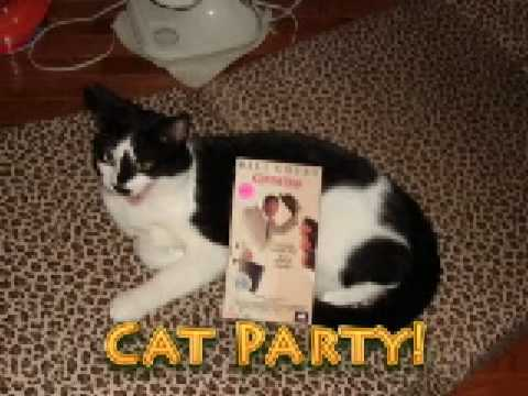 Cat Party (Music from Frisky Dingo)