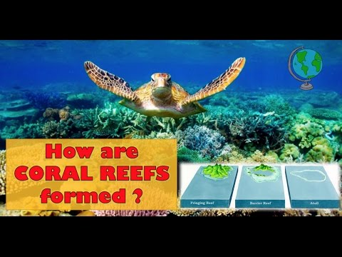 How Coral Reefs Are Formed Labelled Diagram And