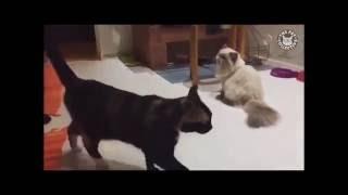Jump Around Cats