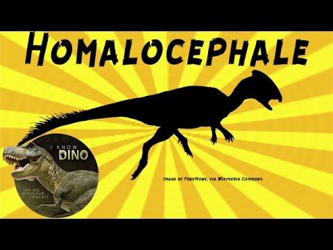 Homalocephale / Prenocephale: Dinosaur of the Day